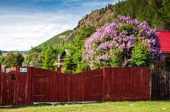 Casa di legno russa tradizionale del paese anziano con il recinto ed il lillà stupefacente Fotografia Stock