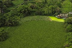 Casa di lungomare e natura verde Immagine Stock Libera da Diritti