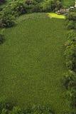 Casa di lungomare vicino al campo verde Immagini Stock