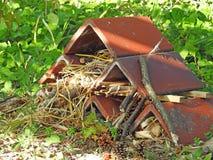 Casa di nascondiglio delle creature del terreno boscoso immagine stock libera da diritti