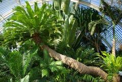 Casa di palma Fotografie Stock Libere da Diritti