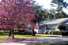 Casa di primavera Immagini Stock