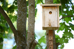 Casa di Starling Immagini Stock