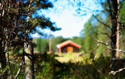 Casa distante dell'azienda agricola della Norvegia nel fondo di legni Immagini Stock