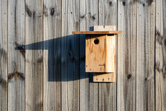 Casa do azulão-americano Imagem de Stock