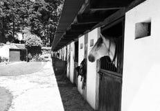 Casa do cavalo Imagem de Stock Royalty Free