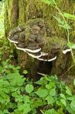 Casa do cogumelo na árvore imagens de stock