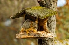 Casa do esquilo Imagens de Stock Royalty Free