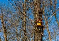 Casa do pássaro em uma árvore fotografia de stock royalty free