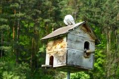 Casa do pombo imagens de stock royalty free