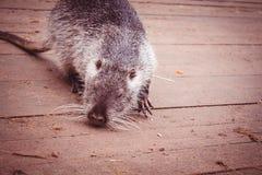 Casa do roedor da exploração agrícola animal do animal Fotos de Stock