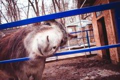 Casa do roedor da exploração agrícola animal do animal Foto de Stock