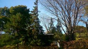 Casa e árvore Imagem de Stock