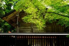 Casa e árvore Fotografia de Stock Royalty Free