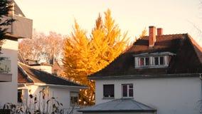 Casa e árvore amarela na opinião cinemático da queda acima video estoque
