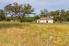 A casa e as árvores da exploração agrícola no vale Seco, Santiago fazem Cacem Imagem de Stock