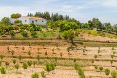 A casa e as árvores da exploração agrícola no vale Seco, Santiago fazem Cacem Fotos de Stock