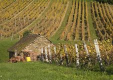 Casa e vinhedo no coração do Jura, Arbois, França Imagens de Stock