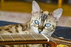 Casa eccellente dell'occhio azzurro del gatto di bellezza del Bengala Fotografia Stock Libera da Diritti