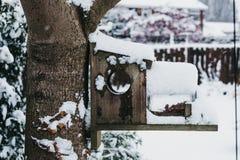 Casa ed alimentatore dell'uccello su un albero in un giardino nell'inverno, coperto in neve Fotografia Stock