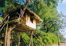 Casa em a árvore Fotografia de Stock