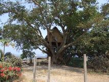 Casa en el árbol original en Vanuatu Imagen de archivo