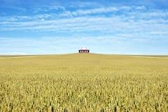 Casa en el medio de un campo del trigo Fotografía de archivo
