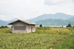 Casa en el medio del bosque Imágenes de archivo libres de regalías