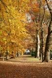 Casa en las maderas con otoño Imágenes de archivo libres de regalías