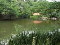 Casa en las zonas tropicales Imagen de archivo