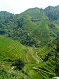 Casa en los campos del arroz Imágenes de archivo libres de regalías