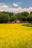 Casa en un campo amarillo Foto de archivo libre de regalías