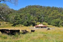 Casa en un campo con ganado Imagen de archivo libre de regalías