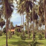 Casa en una arboleda de la palma imagen de archivo