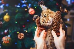 A casa engraçada do gato em casa jogou com fundo bonito do Natal do cone com o daccor do ano novo, árvore de Natal com decorações foto de stock royalty free