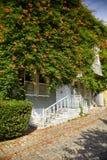 A casa envolveu-se com a trepadeira de Campsis na rua da fonte fria imagens de stock royalty free