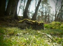 Casa feericamente nas madeiras Foto de Stock Royalty Free