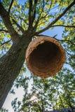 Casa grande de la colmena en un árbol en el bosque Fotos de archivo libres de regalías