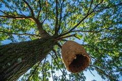 Casa grande de la colmena en un árbol en el bosque Imagen de archivo libre de regalías