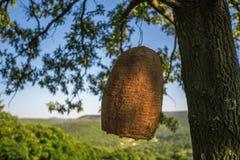 Casa grande de la colmena en un árbol en el bosque Fotos de archivo