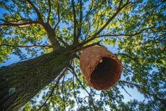 Casa grande de la colmena en un árbol en el bosque Imágenes de archivo libres de regalías