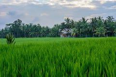 Casa indonésia em campos do arroz de Ubud, Bali, Indonésia imagem de stock