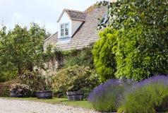 Casa inglesa de piedra con la lavanda, peral en jardín delantero Fotografía de archivo libre de regalías