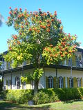Casa Key West di Hemingway Immagine Stock Libera da Diritti