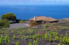 Casa Landelijk onder de wijngaard over de oceaan Stock Foto