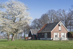 Casa minuscola della campagna all'albero di fioritura Fotografia Stock