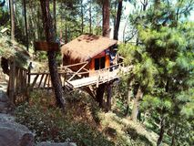 Casa na árvore na floresta tropical do pinus foto de stock