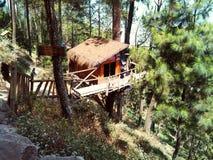 Casa na árvore na floresta tropical do pinus foto de stock
