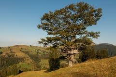 Casa na árvore pequena Imagem de Stock