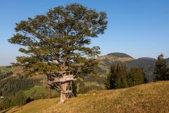 Casa na árvore pequena Foto de Stock